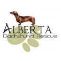 Alberta Dachshund Rescue