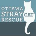Ottawa Stray Cat Rescue